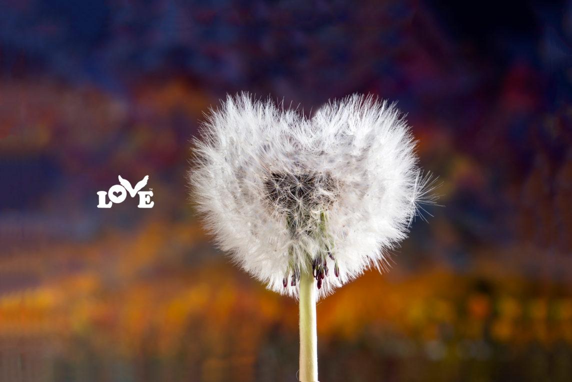 Love Button Global Movement Dandelion
