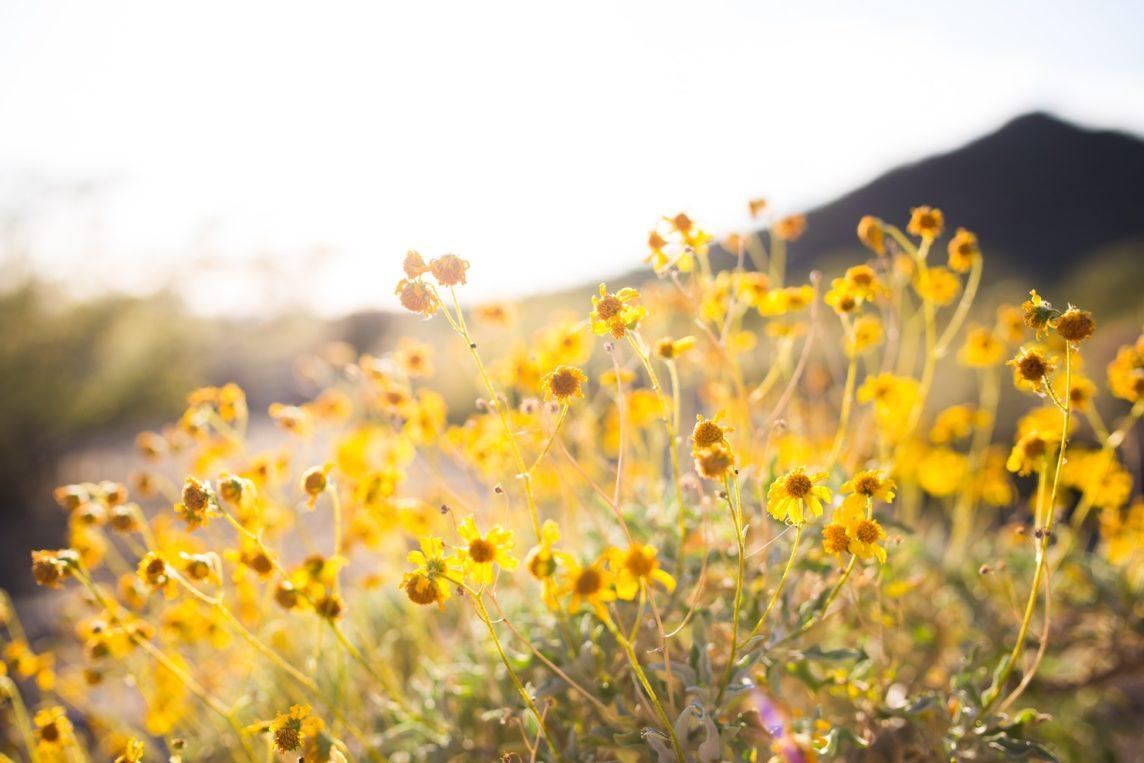 Be Hive of Healing Susan M. Testimonial