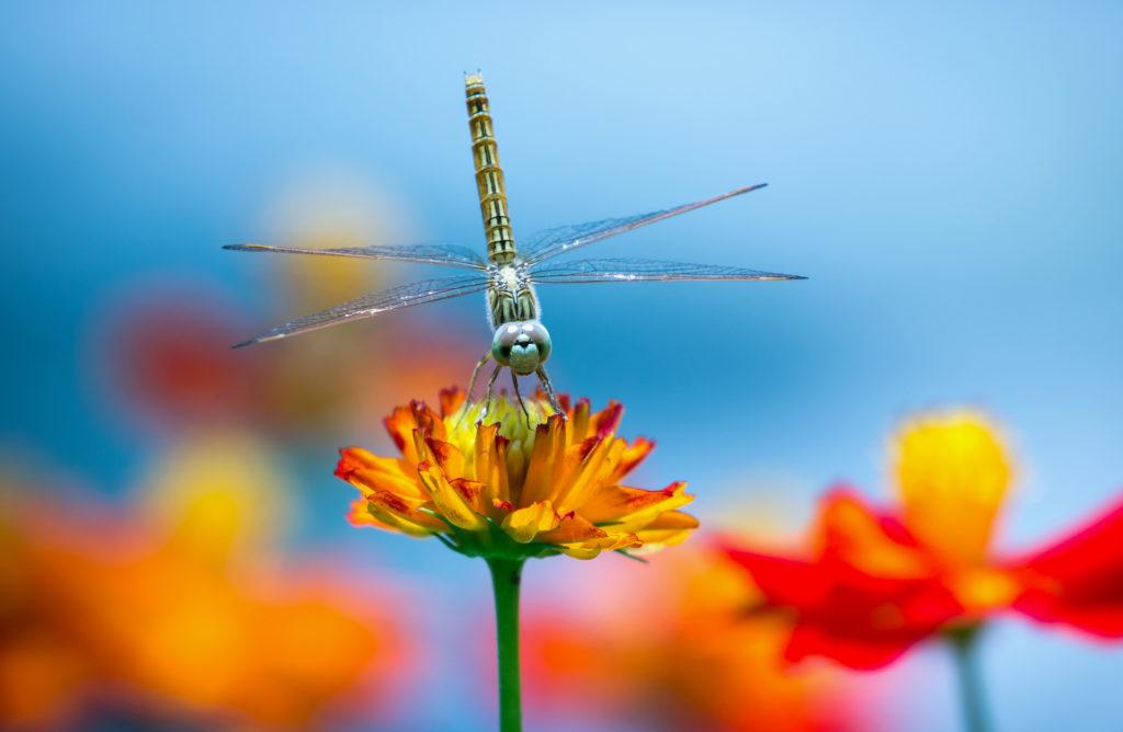 Life, Death & Dragonflies