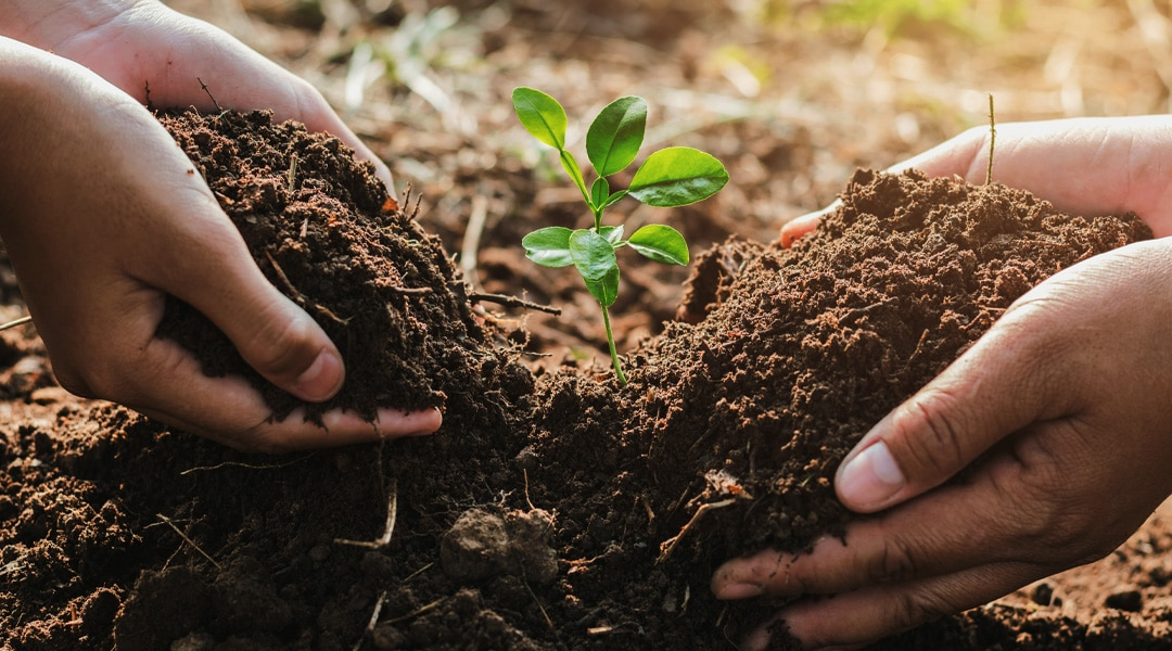 In Defense of Dirt
